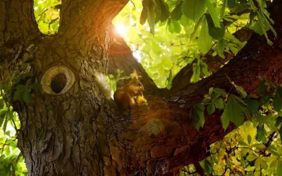 дереве, разные, белки, темы, нас, компьютера, экспрессивных, эстетичных, дерево, коллекция,