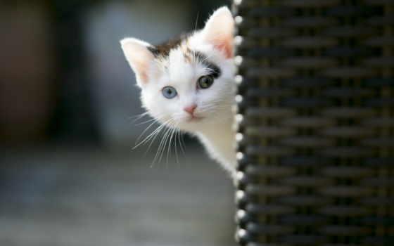 котята, кошки, коты, забавные, часть, liveinternet, метки,