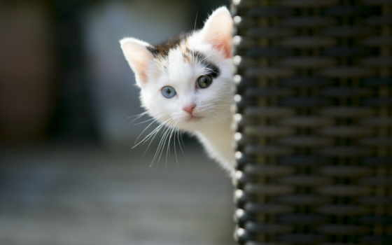 котята, кошки, коты
