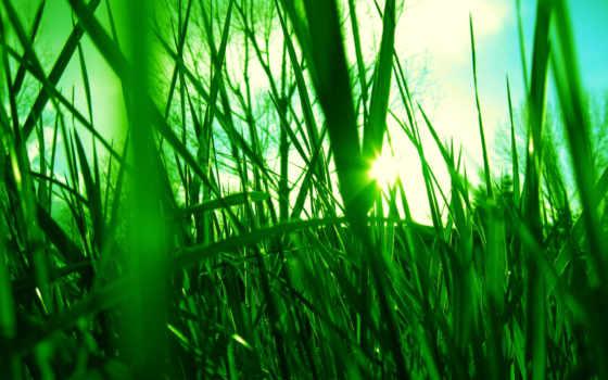 зелёный, sun, сквозь, траву, разных, трава, разрешениях, зеленую, светит, небе, сочную,
