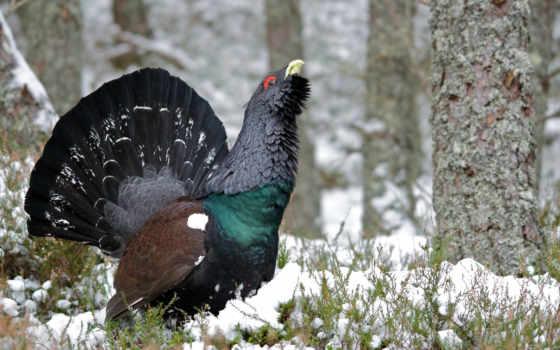 природа, video, купить, птица, весна, рыбалка, hunting, области, zhivotnye,