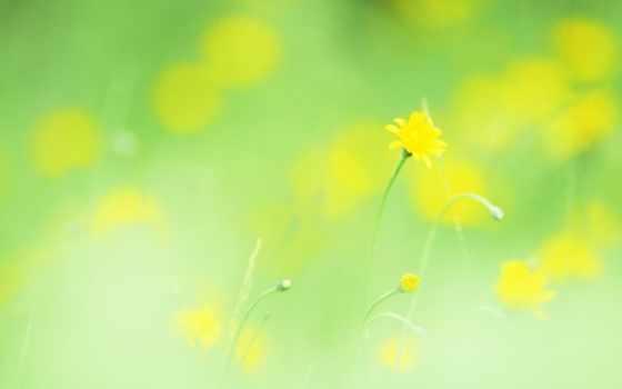 легкость, макро, cvety, yellow, растение