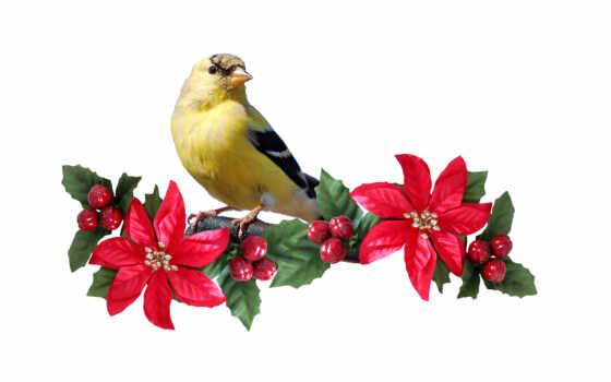 животные, птицы Фон № 6389 разрешение 3048x1976