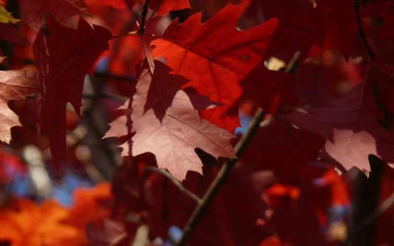 осень, листья Фон № 27224 разрешение 2560x1600