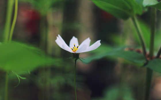 цветы, макро, высоком