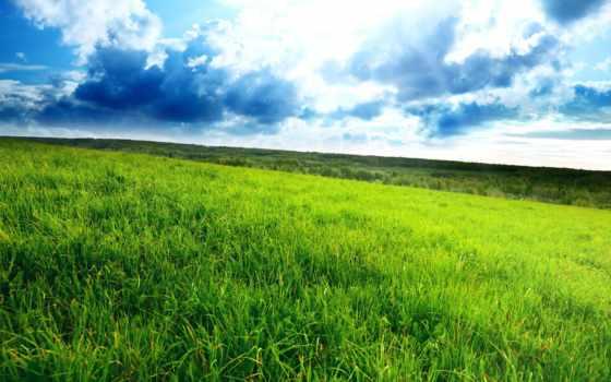трава, зелёная, небо