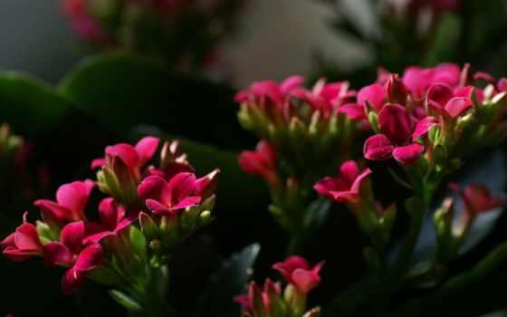 flowers, цветы, garden