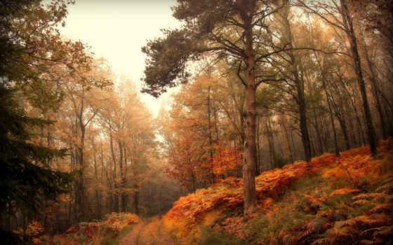 лес, осень, природа