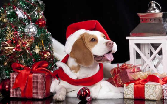 год, new, christmas, zhivotnye, картинка, собаки, shariki, подарки, time,