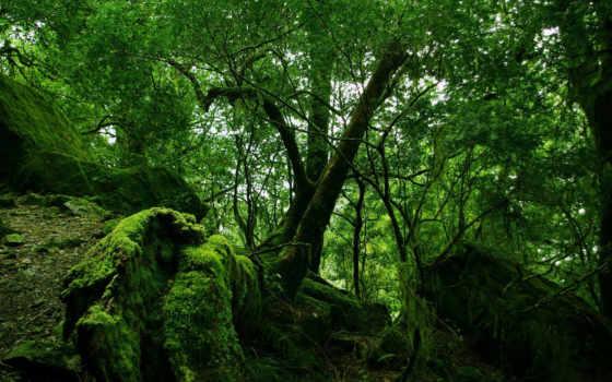 лес, зелёный, качественные, full, jungle, чаща, мох, заставки,