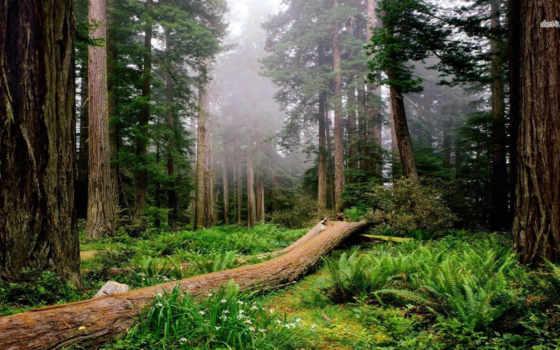 пейзажи -, лес, история, мира, медведи, сосны, лесные, вороны, сонник, едят,