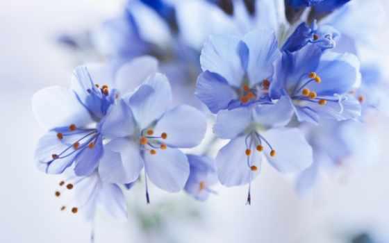 cvety, нежные, отложитьзаказать, картины, купить, оптом, весенние, фотообои,