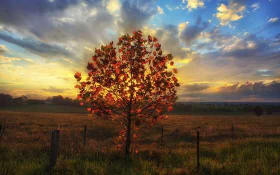 дерево, widescreen, pictures, sheldon, imac, retina, maraqlı, şəkillər, часть, фотосессия,