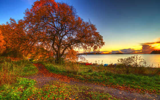 осень, озеро, природа, landscape, trees, закат, листва, лес, трава,