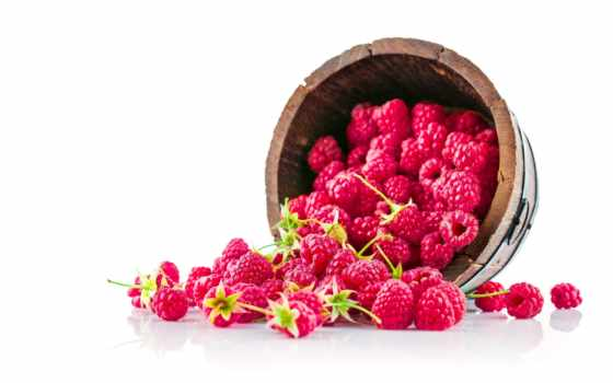 изображение, малина, растение, май, highlights, row, ukraine,