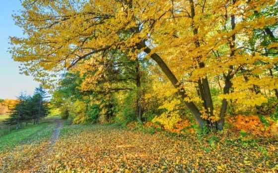 осень, дерево, one,