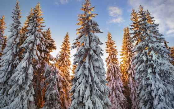 white, море, pine, песок, пляж, winter, summer, iceland, камень, bay, palm