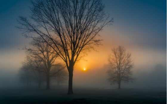 landscape, sun, david, tapety, туман, natural, природа