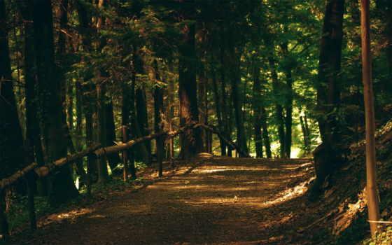 лес, деревья, флот