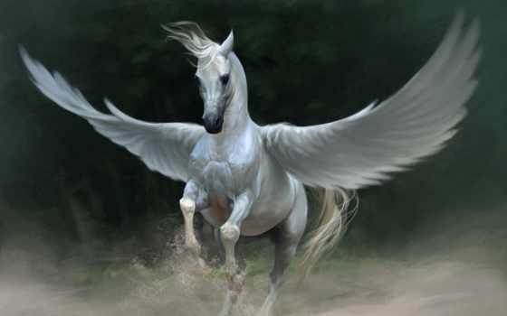 пегас, крылья, fantasy