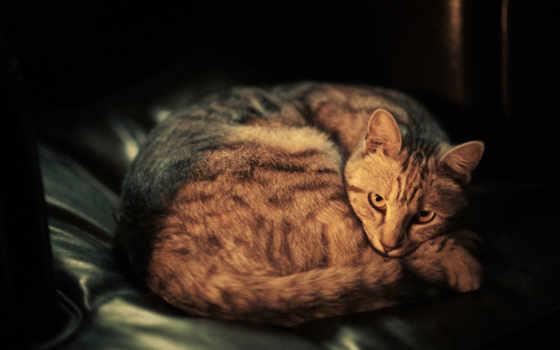 кот, ложь, морда