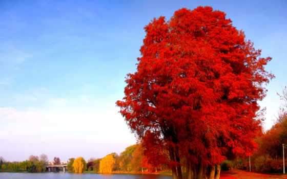 природа, full, widescreen, дерево, pictures, vermelho, осень,