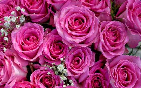 roses, букет, шишки
