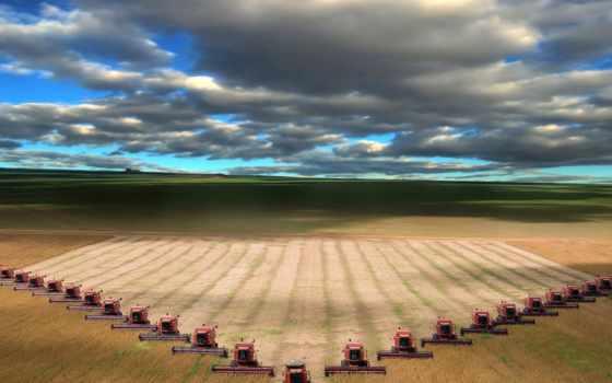 cleaning, урожая, пшеницы, механическая, landscape, коллекция, зерновых, обмолот, сивоконь, поле, культур,