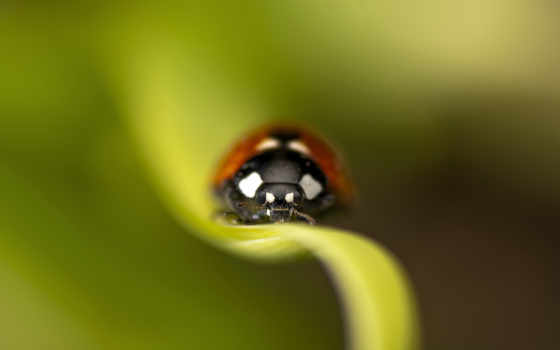 ladybug, leaf, ipad, desktop, изображение, картинка, мини,