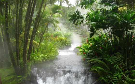 jungle, взгляд, азиатские, водопад, бамбук, зелёный,