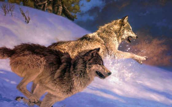 волки, волк, winter