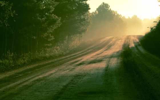 утро, природа, свет, дорога, роса, лес, осень,