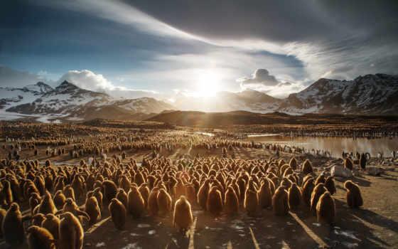 ,, небо, гора, пейзаж, стадо, экорегион, миграция животных, облако, тундра, пингвин, птица,