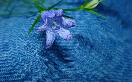 кб, альбом, mobile, цветы, postimage, sever, earth, новый, волны,