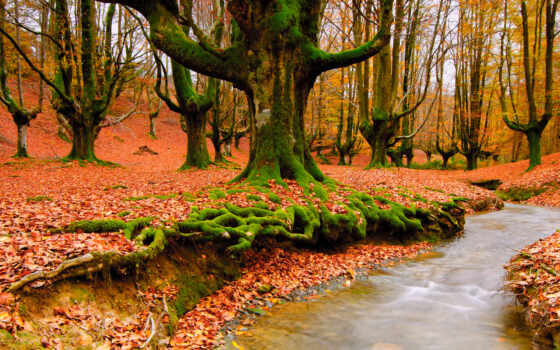 природа, осень, лес Фон № 64764 разрешение 1920x1200