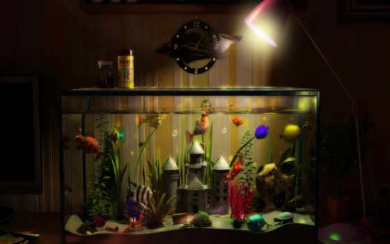 аквариум, рыбки, замок