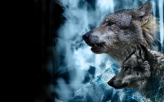 lobos, descripción, fotos