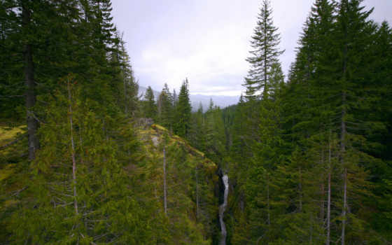 les, горы, речка, деревя, горный,