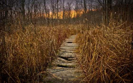 трава, dry, путь