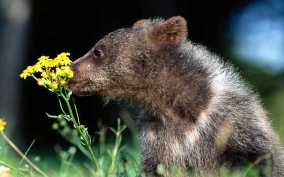 zhivotnye, цветы, медвежонок