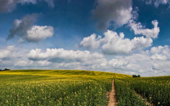 land, облако, природа, mushroom, skyscapes, art, страница,