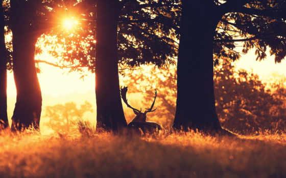 лес, лань, закат, природа, фото, небо, resolution, trees, are,