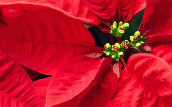 листья, red, красными, bush, красные, цветы, листьями, ul,