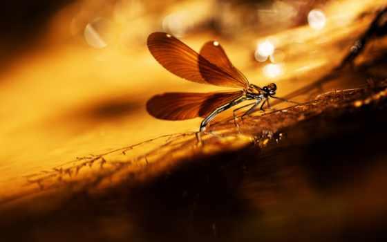 fondos, pantalla, libélulas, para, libélula, escritorio, fondo, las,