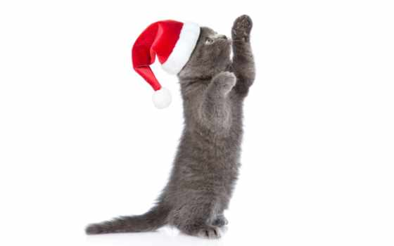 кот, new, собака, free, animal, шапка, grey, телефон