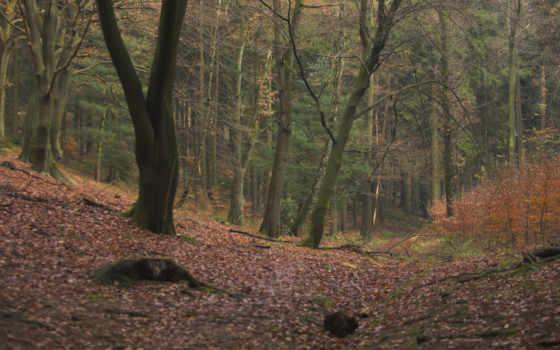 лес, листва