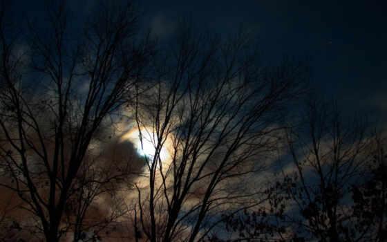 луна, деревья