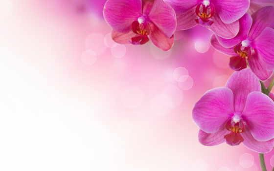 орхидеи, цветы, растительность
