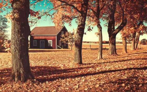 осень, house, листья