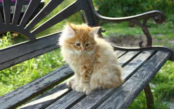 милые, коллекция, кошки
